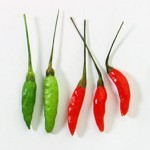 indian chillies