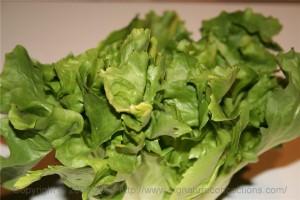 leafy green escarole